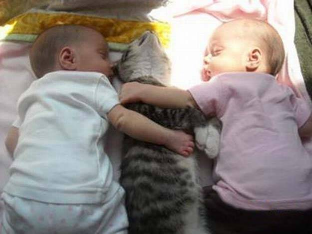 Bebelusul si animalele